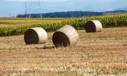 Indian pondering USD 200 mln investment in Romanian agriculture